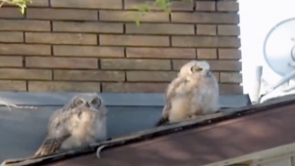 Who Wants To Watch An Owl Poop On Another Owl And Then Run Away?