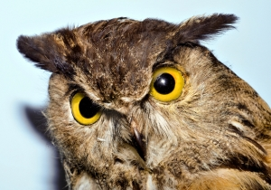 A Colorado Man Doesn't Give A Hoot, Using A Stuffed Owl To Defend Himself In Court