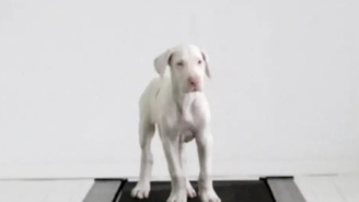 Watch This Adorable Great Dane Puppy Grow Up In A Touching Time Lapse Video