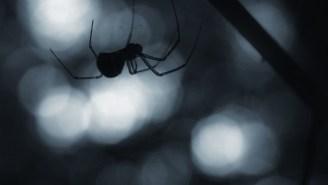 NOPE: It's Raining Spiders In Australia, So Stay Inside Forever