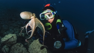 Watch This Tiny Octopus Viciously Attack Some Idiot Humans Who Disturbed Him