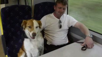 An Amazing Escape Artist Dog Uses A Trampoline To Board His Owner's Commuter Train