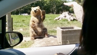 Watch This Friendly Waving Bear Catch Some Bread Like It's Nothing