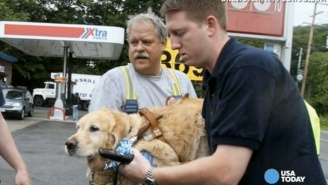 This Hero Service Dog Leaped In Front Of A Bus To Protect His Blind Owner