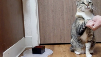This Amazing Cat Sits And Shakes Paws On Command Better Than Most Dogs