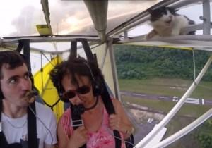 Daredevil Cat Surprises Pilot With Death-Defying Stunt