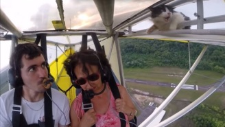 Daredevil Cat Surprises Pilot With Death-Defying Stunt