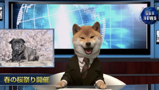 This Suit-Wearing Dog Anchor Should Have Taken Over 'Nightly News'