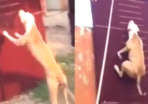 This Is A Dog Flying In The Air, Defying Gravity And Climbing A Wall