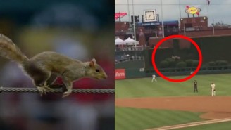 Check Out The Evel Knievel Of Squirrels Make A Death-Defying Jump At A Phillies Game