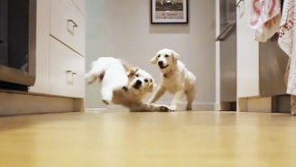 Nothing Is Cuter Than These Puppies Running For Their Dinner In Time-Lapse