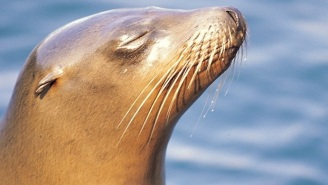 A Sea Lion Photobombed A Fisherman, Then Tried To Drown Him