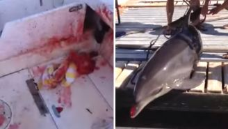 This Dolphin Decided To Jump Into A Boat And Break A Woman's Ankles