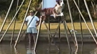 This Dog Sliding Down A Giant Slide That Goes Into A Lake Is Doing It Right