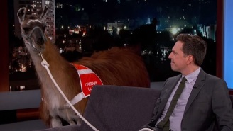 Ed Helms Brought His Therapy Llama To 'Jimmy Kimmel Live' And Demonstrated The Vicious Cycle Of Anxiety