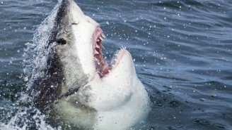 What's On Tonight: It's The Most Wonderful Time Of The Year. Shark Week Is Back.