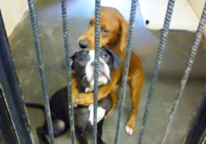 The Internet Saved These Hugging Dogs And Gave Them A Forever Home