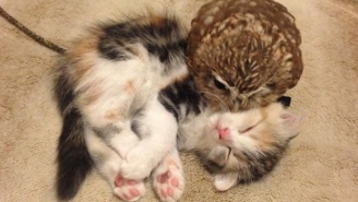 This Kitten And Owlet Best Friend Duo Is The Cutest Thing You'll See Today