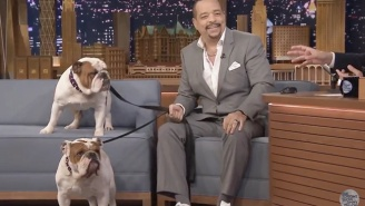 Ice-T Brought His Bulldogs On 'The Tonight Show' With Him Because Why Not?