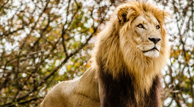 lion-milwaukee-5