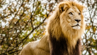 An Escaped Lion Is Terrorizing Milwaukee, And Its Tweets Are Slammin'