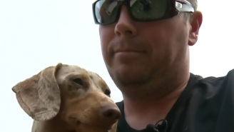 This Man Punched A Cougar In The Face To Save His Weiner (Dog)