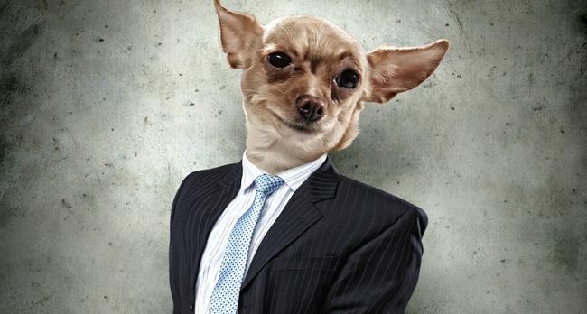 mayor_dog
