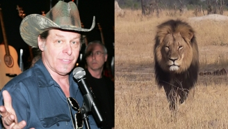 Ted Nugent Doesn't Buy The Cecil The Lion Narrative: 'This Whole Story Is A Lie'