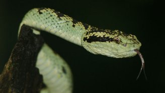 Scientists Have Re-Engineered Yeast To Produce Snake Venom