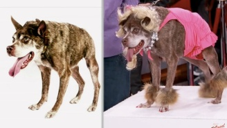 Jimmy Kimmel And Carson Kressley Gave The World's Ugliest Dog A Makeover