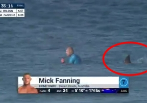 Surfer Mick Fanning Is Back In The Water After His Harrowing Shark Attack Encounter