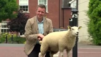 Watch As This BBC Reporter Gets Peed On By A Little Lamb