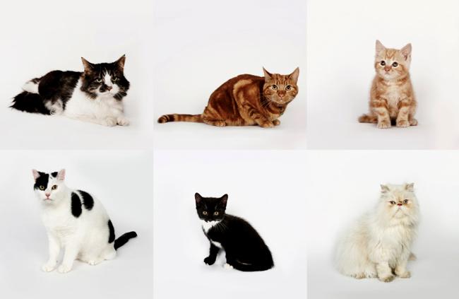 Six-Bored-Cats