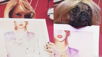 Here Is A Pug Recreating Taylor Swift's Most Famous Instagram Photos