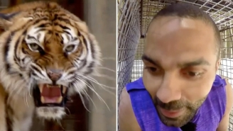 Here's Tony Parker Trying To Avoid Getting Eaten By A Tiger On A French Game Show