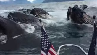Watch As This Guy Freaks Out Over Witnessing A Group Of Humpback Whales Feeding