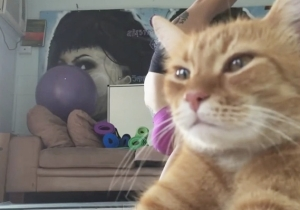 Enjoy Watching This Cat Smugly Ruin Its Owner's Yoga Video