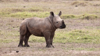 This Baby Rhino Tried To Adopt A Jeep As Its Mom After She Was Killed