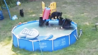 This Family Of Bears Took Over A Swimming Pool, And These Little Girls Are Not Happy