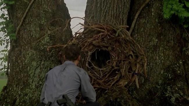 cajun-bird-trap