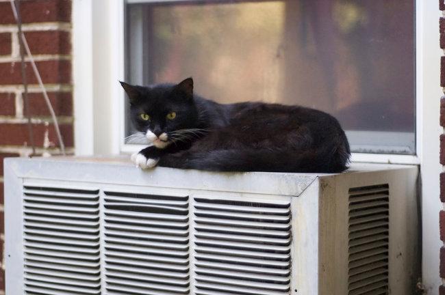 cat air conditioner