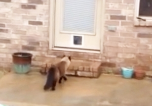 This Cat Is Not Impressed With The Cat Door His Owner Painstakingly Installed