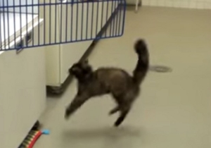 This Cat Tries To Jump From A Waxed Floor And Fails Miserably