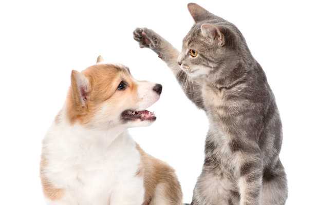 cats swats puppy