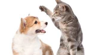 The Eternal Cats Versus Dogs Dispute Nearly Killed Off Dogs