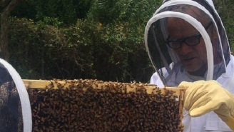 So, Flea From Red Hot Chili Peppers Is A Beekeeper Now?