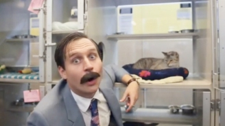 The Calgary Humane Society Is Employing Used Car Salesman Tactics To Move Cats
