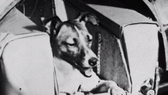 Meet 10 Dogs From History Who Are Truly Heroes