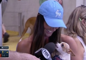 This Dog Did Not Care To Be Interviewed At A Miami Marlins Game