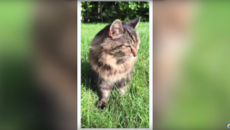 This Is The Guinness Book Of World Records' Oldest Cat